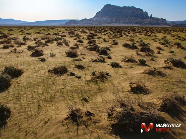 Иірдің ойында жаңбырсыз көктем (ФОТО)